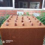 Siembra cacao espuma agrícola