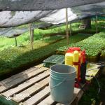 Espuma agrícola sustrato para café.